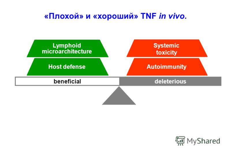 deleteriousbeneficial Lymphoid microarchitecture Host defense Systemic toxicity Autoimmunity «Плохой» и «хороший» TNF in vivo.
