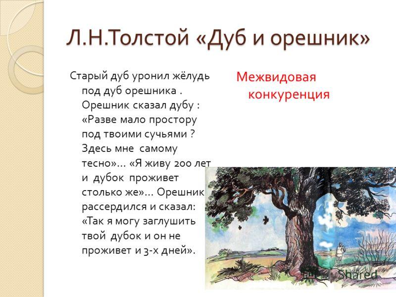 Л. Н. Толстой « Дуб и орешник » Старый дуб уронил жёлудь под дуб орешника. Орешник сказал дубу : « Разве мало простору под твоими сучьями ? Здесь мне самому тесно »… « Я живу 200 лет и дубок проживет столько же »… Орешник рассердился и сказал : « Так