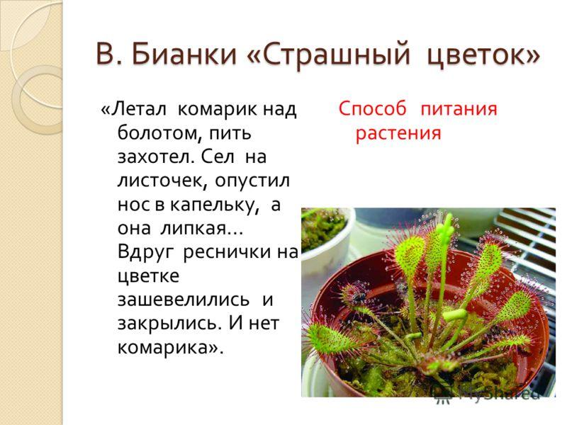 В. Бианки « Страшный цветок » « Летал комарик над болотом, пить захотел. Сел на листочек, опустил нос в капельку, а она липкая... Вдруг реснички на цветке зашевелились и закрылись. И нет комарика ». Способ питания растения