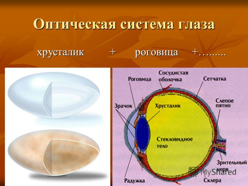 Оптическая система глаза хрусталик + роговица +…...... хрусталик + роговица +…......