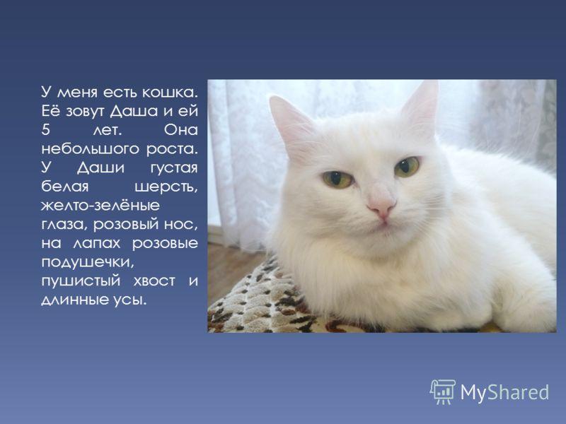 У меня есть кошка. Её зовут Даша и ей 5 лет. Она небольшого роста. У Даши густая белая шерсть, желто-зелёные глаза, розовый нос, на лапах розовые подушечки, пушистый хвост и длинные усы.
