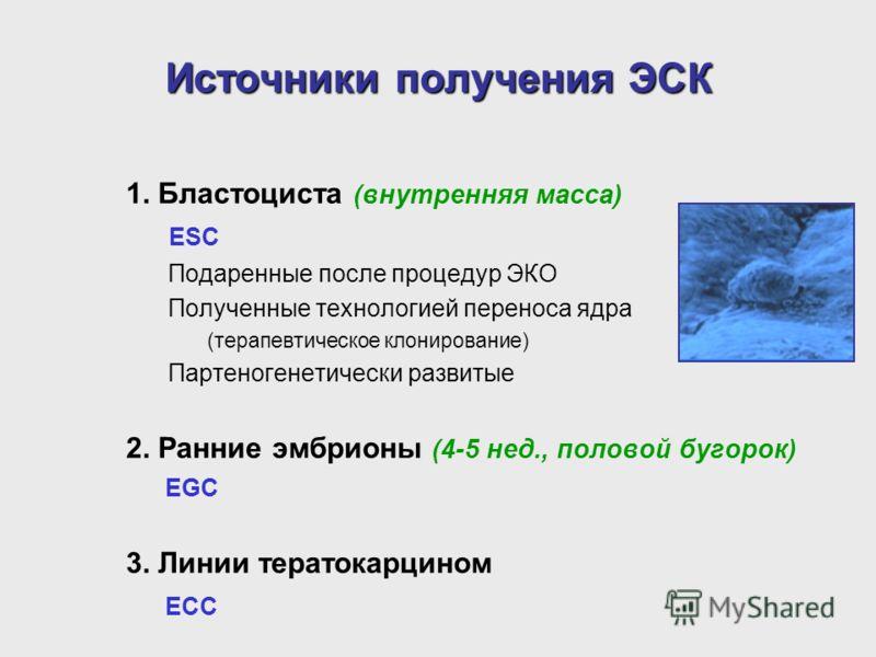 Источники получения ЭСК 1. Бластоциста (внутренняя масса) ESC Подаренные после процедур ЭКО Полученные технологией переноса ядра (терапевтическое клонирование) Партеногенетически развитые 2. Ранние эмбрионы (4-5 нед., половой бугорок) EGC 3. Линии те