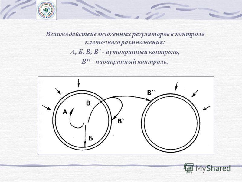 Понятие об экзогенных и эндогенных факторах регуляции Факторы, регулирующие размножение клеток: А - экзогенные (внеклеточные); Б - эндогенные (внутриклеточные)
