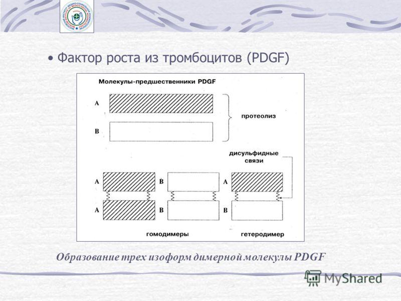Взаимодействие экзогенных регуляторов в контроле клеточного размножения: А, Б, В, В' - аутокринный контроль, В'' - паракринный контроль.