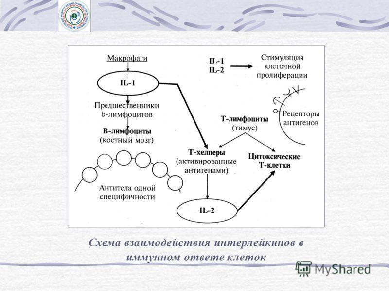 Эпидермальный фактор роста (EGF), фактор роста фибробластов (FGF) и инсулиноподобные факторы роста (IGF) Трансформирующие факторы роста (TGF) Интерлейкины (IL) и факторы, стимулирующие рост клеточных колоний (CSF)