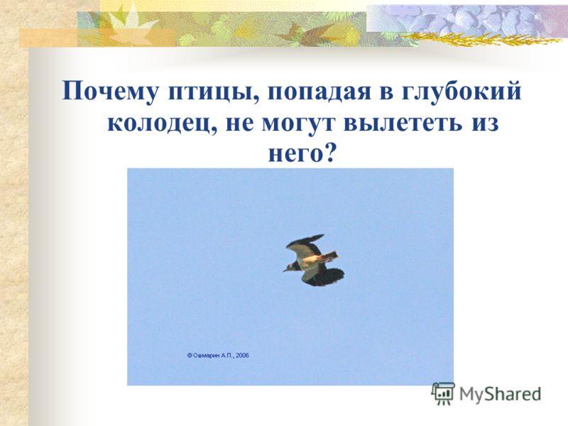 Почему птицы, попадая в глубокий колодец, не могут вылететь из него?