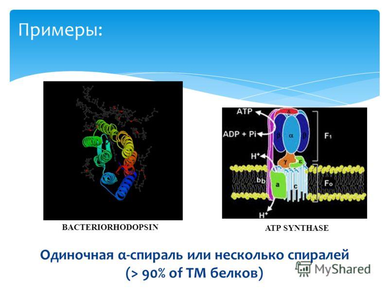 Примеры: BACTERIORHODOPSIN Одиночная α-спираль или несколько спиралей (> 90% of TM белков) ATP SYNTHASE