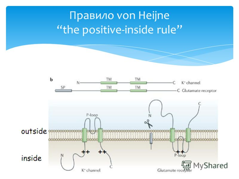 Правило von Heijnethe positive-inside rule