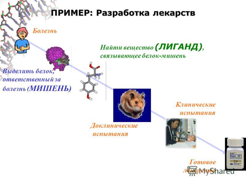 ПРИМЕР: Разработка лекарств Болезнь Выделить белок, ответственный за болезнь ( МИШЕНЬ) Найти вещество (ЛИГАНД), связывающее белок-мишень Доклинические испытания Клинические испытания Готовое лекарство