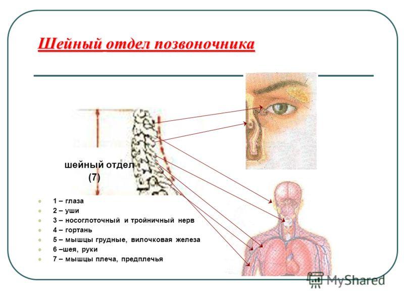 Схема лечения остеохондроза шейного отдела позвоночника медикаментами