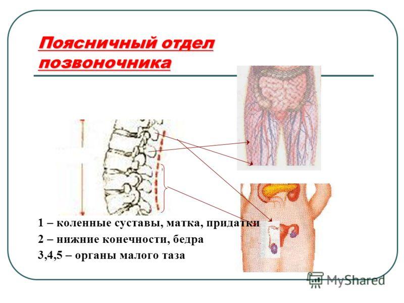 Поясничный отдел позвоночника 1 – коленные суставы, матка, придатки 2 – нижние конечности, бедра 3,4,5 – органы малого таза