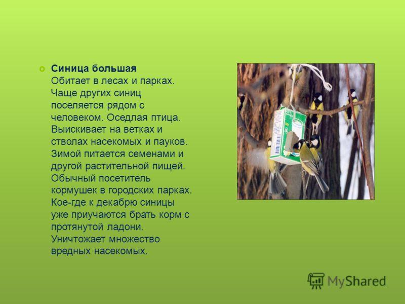 Синица большая Обитает в лесах и парках. Чаще других синиц поселяется рядом с человеком. Оседлая птица. Выискивает на ветках и стволах насекомых и пауков. Зимой питается семенами и другой растительной пищей. Обычный посетитель кормушек в городских па