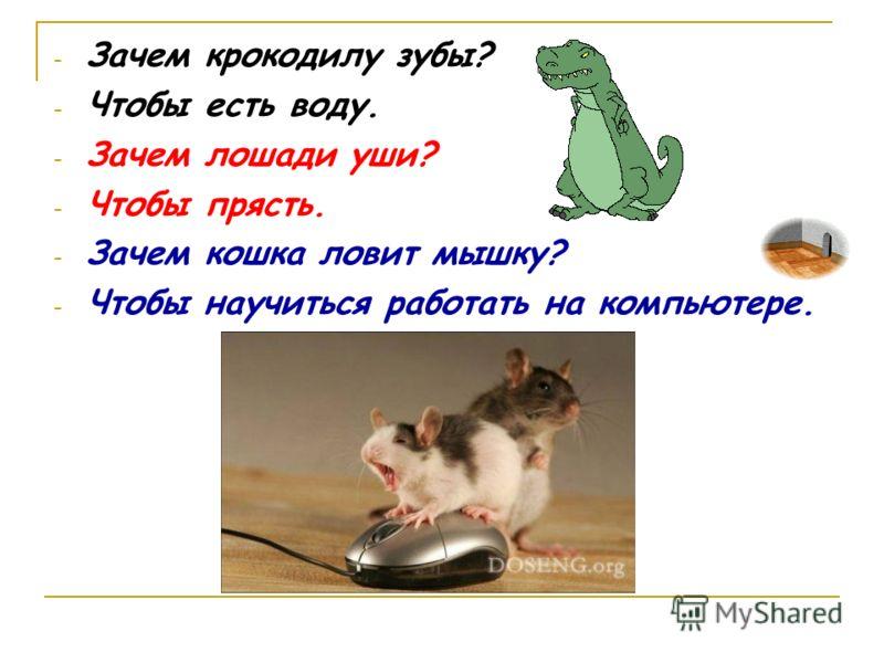 - Зачем крокодилу зубы? - Чтобы есть воду. - Зачем лошади уши? - Чтобы прясть. - Зачем кошка ловит мышку? - Чтобы научиться работать на компьютере.