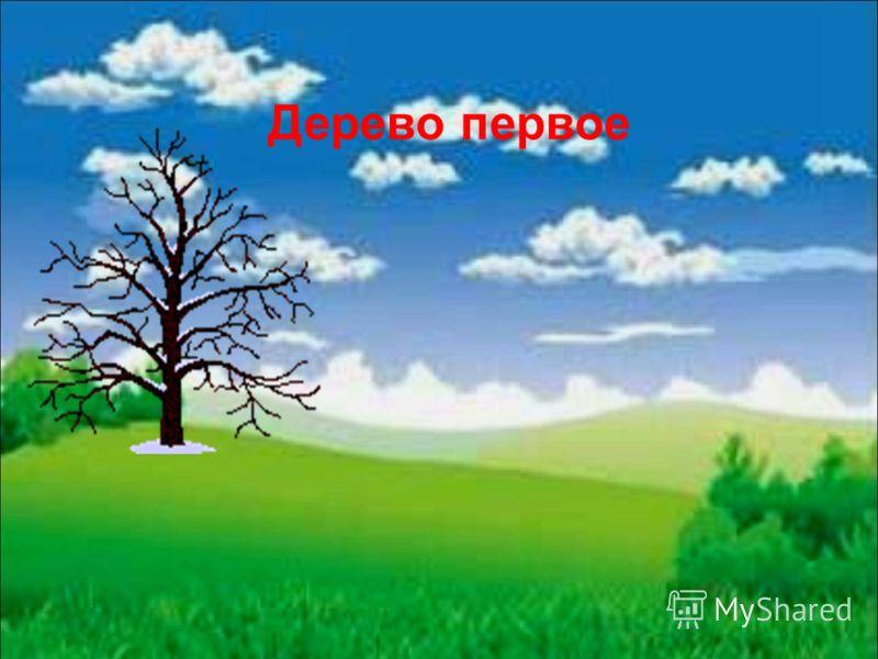Дерево первое