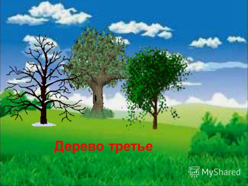 Дерево третье