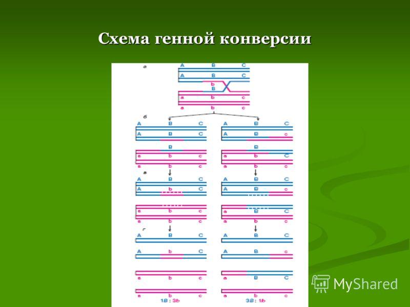 Схема генной конверсии