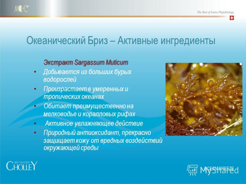Экстракт Sargassum Muticum Экстракт Sargassum Muticum Добывается из больших бурых водорослей Произрастает в умеренных и тропических океанах Обитает преимущественно на мелководье и коралловых рифах Активное увлажняющее действие Природный антиоксидант,