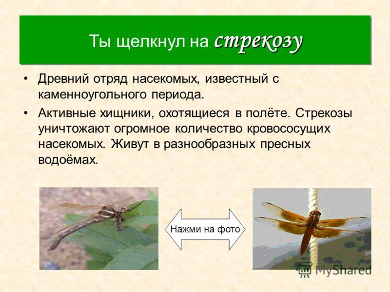 Стрекоза Древний отряд насекомых, известный с каменноугольного периода. Активные хищники, охотящиеся в полёте. Стрекозы уничтожают огромное количество кровососущих насекомых. Живут в разнообразных пресных водоёмах. стрекозу Ты щелкнул на стрекозу Наж