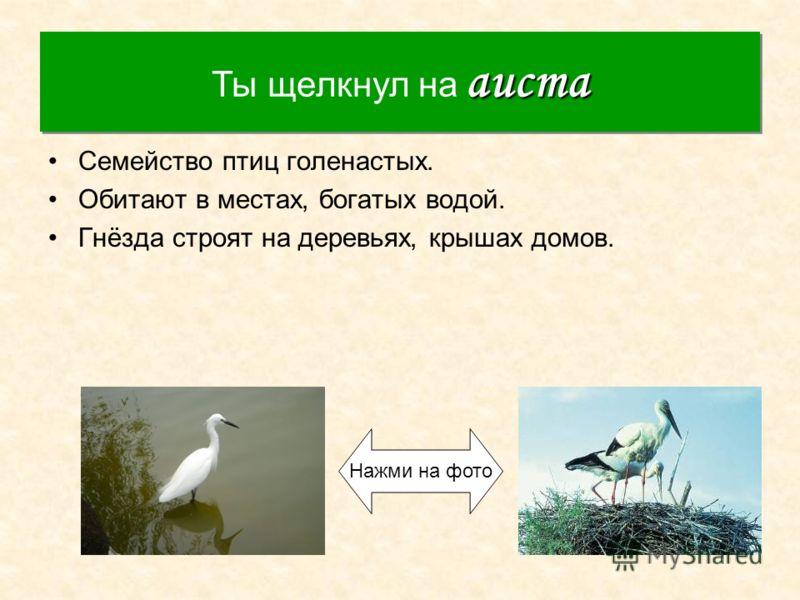 Аист Семейство птиц голенастых. Обитают в местах, богатых водой. Гнёзда строят на деревьях, крышах домов. аиста Ты щелкнул на аиста Нажми на фото