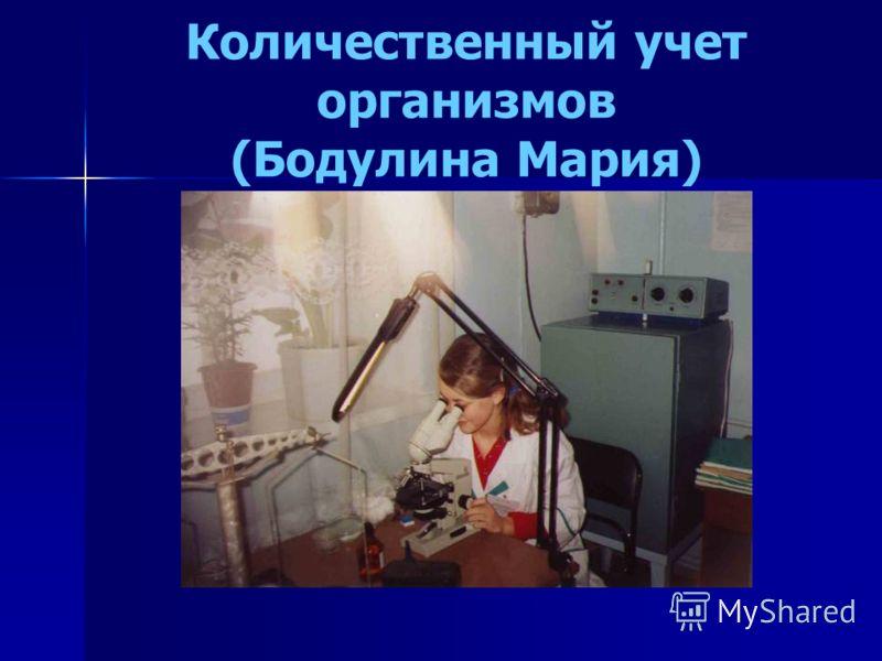 Количественный учет организмов (Бодулина Мария)