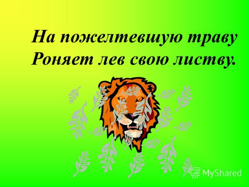 На пожелтевшую траву Роняет лев свою листву.