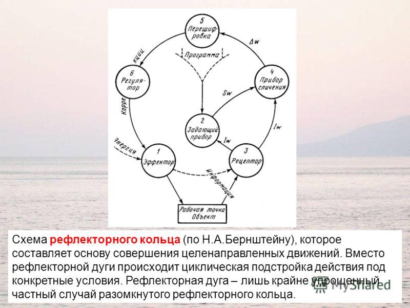 Схема рефлекторного кольца (по Н.А.Бернштейну), которое составляет основу совершения целенаправленных движений. Вместо рефлекторной дуги происходит циклическая подстройка действия под конкретные условия. Рефлекторная дуга – лишь крайне упрощенный час
