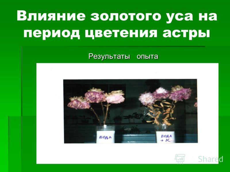 Влияние золотого уса на период цветения астры Результаты опыта Результаты опыта