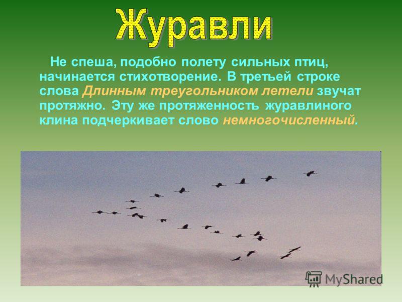 Не спеша, подобно полету сильных птиц, начинается стихотворение. В третьей строке слова Длинным треугольником летели звучат протяжно. Эту же протяженность журавлиного клина подчеркивает слово немногочисленный.