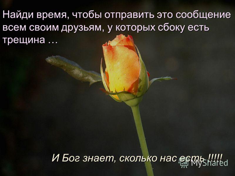 Итак, все мои друзья с трещинкой в кувшине! Радуйтесь чудесным дням и не забывайте насладиться запахом цветов на вашей стороне тропинки.