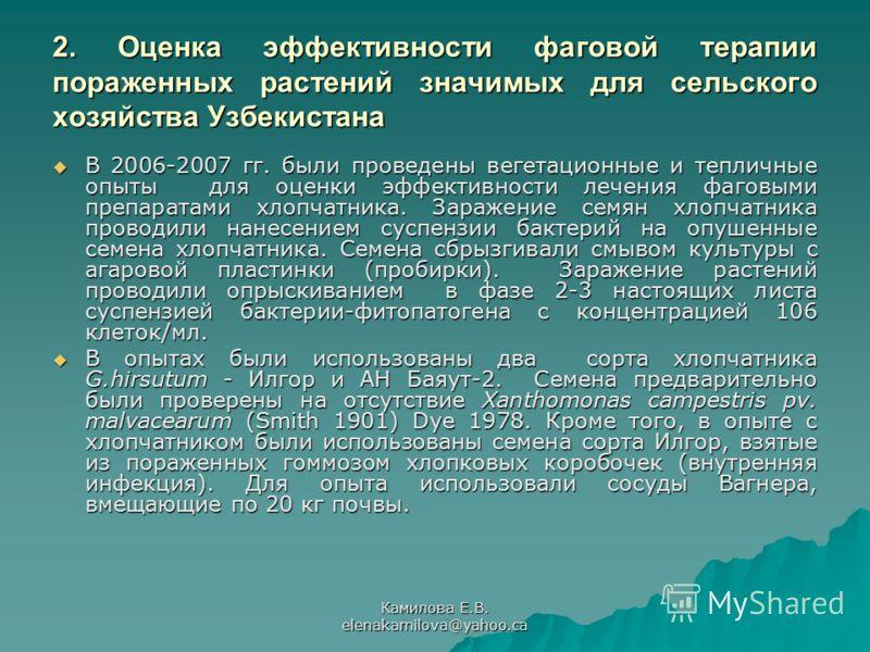 Камилова Е.В. elenakamilova@yahoo.ca 2. Оценка эффективности фаговой терапии пораженных растений значимых для сельского хозяйства Узбекистана В 2006-2007 гг. были проведены вегетационные и тепличные опыты для оценки эффективности лечения фаговыми пре