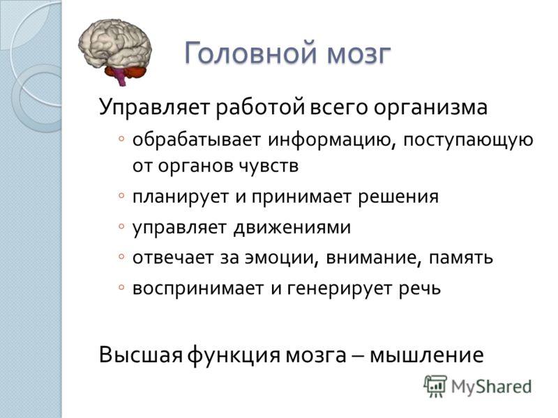 Головной мозг Управляет работой всего организма обрабатывает информацию, поступающую от органов чувств планирует и принимает решения управляет движениями отвечает за эмоции, внимание, память воспринимает и генерирует речь Высшая функция мозга – мышле