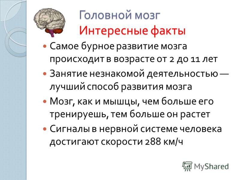 Головной мозг Интересные факты Самое бурное развитие мозга происходит в возрасте от 2 до 11 лет Занятие незнакомой деятельностью лучший способ развития мозга Мозг, как и мышцы, чем больше его тренируешь, тем больше он растет Сигналы в нервной системе