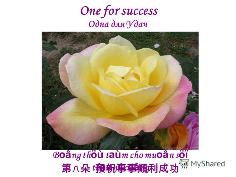 One for beauty B oâ ng th öù b aû y cho v eû ñeï p thanh xu aâ n Одна для Красоты