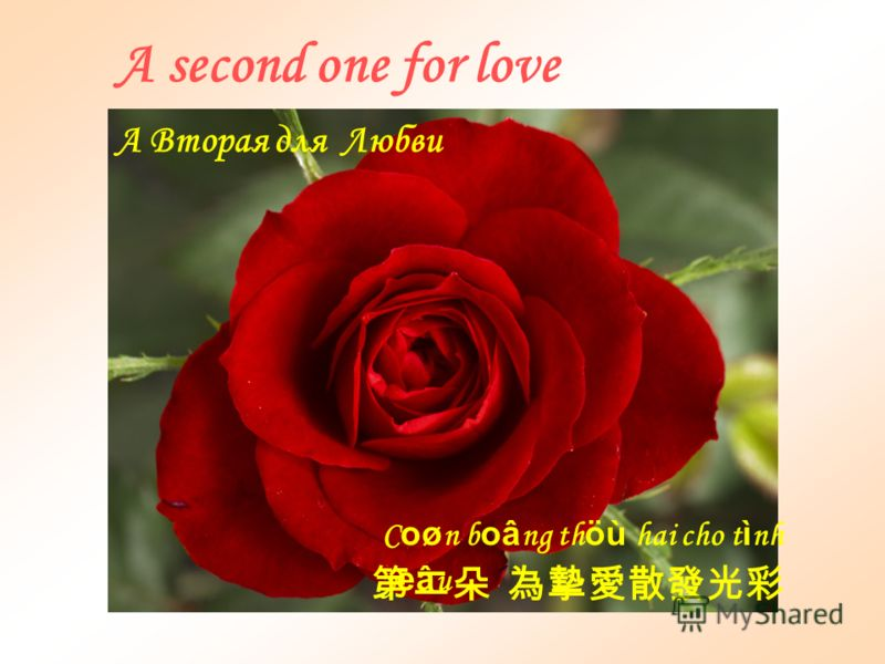 One rose for friendship B oâ ng ñaà u cho t ì nh b aè ng h öõ u Первая для Дружбы
