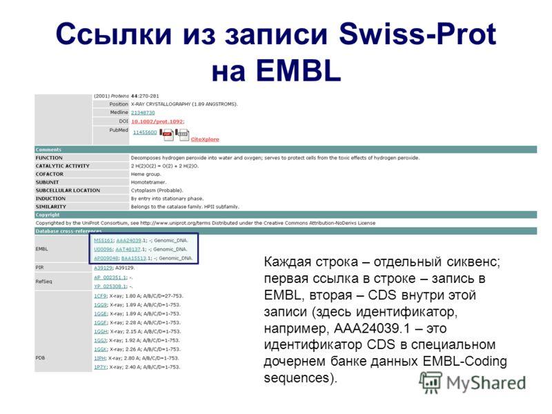 Ссылки из записи Swiss-Prot на EMBL Каждая строка – отдельный сиквенс; первая ссылка в строке – запись в EMBL, вторая – CDS внутри этой записи (здесь идентификатор, например, AAA24039.1 – это идентификатор CDS в специальном дочернем банке данных EMBL