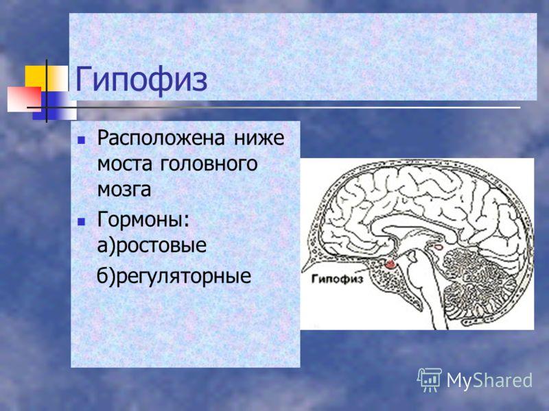 Гипофиз Расположена ниже моста головного мозга Гормоны: а)ростовые б)регуляторные