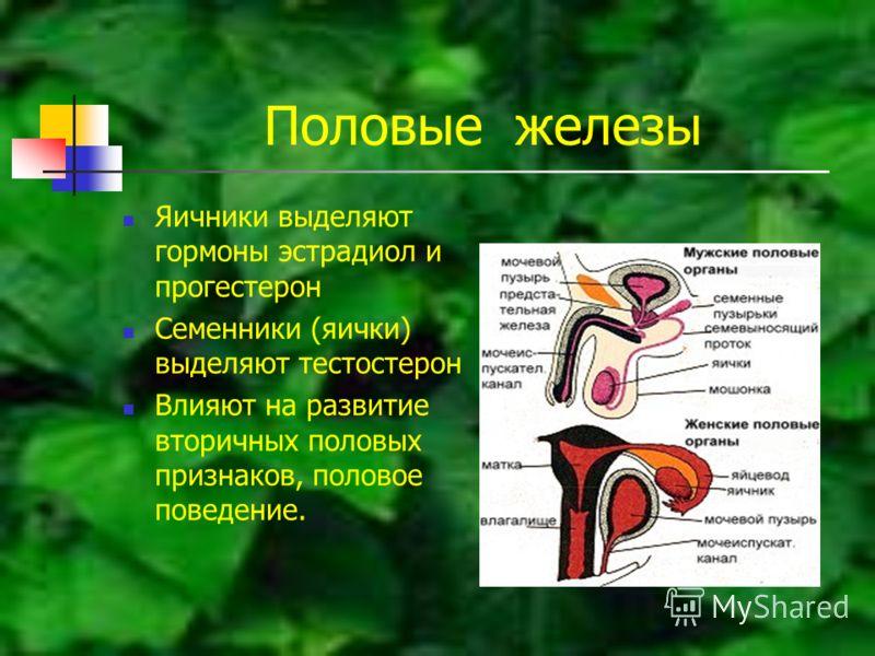 Половые железы Яичники выделяют гормоны эстрадиол и прогестерон Семенники (яички) выделяют тестостерон Влияют на развитие вторичных половых признаков, половое поведение.