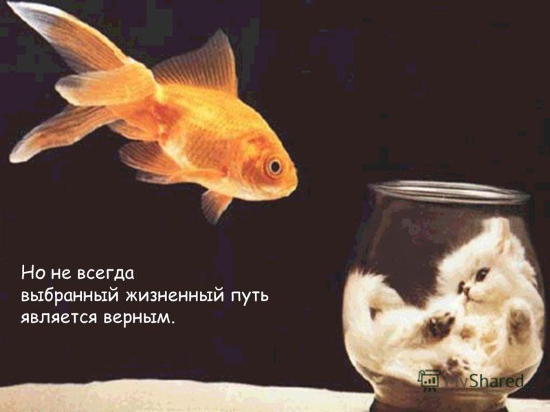 Но не всегда выбранный жизненный путь является верным.