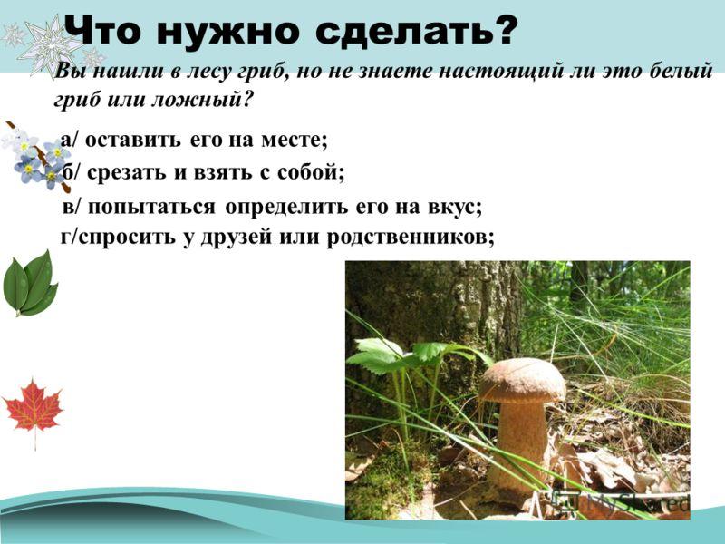 Что нужно сделать? Вы нашли в лесу гриб, но не знаете настоящий ли это белый гриб или ложный? а/ оставить его на месте; б/ срезать и взять с собой; в/ попытаться определить его на вкус; г/спросить у друзей или родственников;