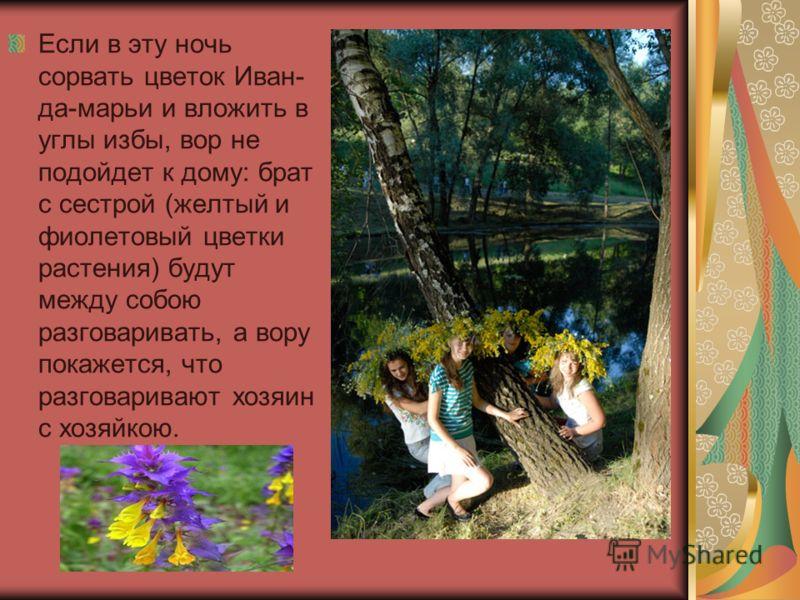 Если в эту ночь сорвать цветок Иван- да-марьи и вложить в углы избы, вор не подойдет к дому: брат с сестрой (желтый и фиолетовый цветки растения) будут между собою разговаривать, а вору покажется, что разговаривают хозяин с хозяйкою.