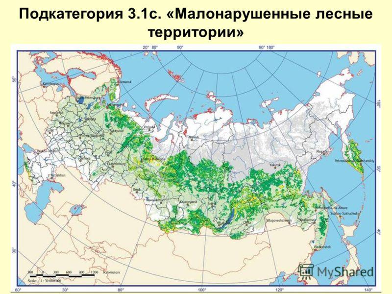 Подкатегория 3.1c. «Малонарушенные лесные территории»