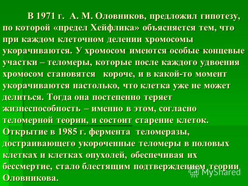 В 1971 г. А. М. Оловников, предложил гипотезу, по которой «предел Хейфлика» объясняется тем, что при каждом клеточном делении хромосомы укорачиваются. У хромосом имеются особые концевые участки – теломеры, которые после каждого удвоения хромосом стан