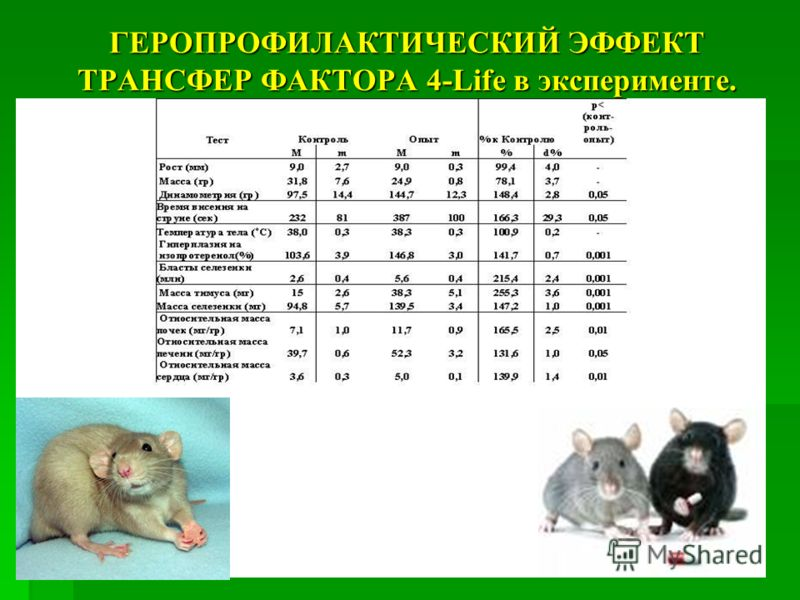 ГЕРОПРОФИЛАКТИЧЕСКИЙ ЭФФЕКТ ТРАНСФЕР ФАКТОРА 4-Life в эксперименте.