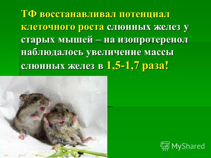 ТФ восстанавливал потенциал клеточного роста слюнных желез у старых мышей – на изопротеренол наблюдалось увеличение массы слюнных желез в 1,5-1,7 раза! ТФ восстанавливал потенциал клеточного роста слюнных желез у старых мышей – на изопротеренол наблю
