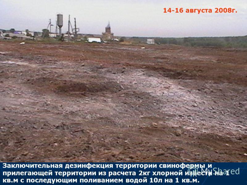 Заключительная дезинфекция территории свинофермы и прилегающей территории из расчета 2кг хлорной извести на 1 кв.м с последующим поливанием водой 10л на 1 кв.м. 14-16 августа 2008г.
