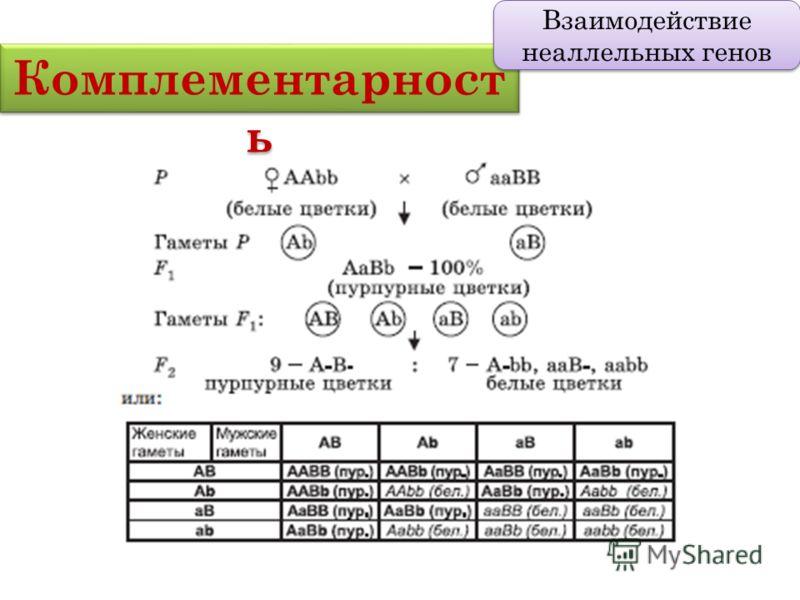 Комплементарност ь Взаимодействие неаллельных генов