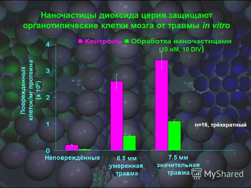 Поврежденных клеток/мг протеина (x 10 6 ) Неповреждённые 6.5 мм умеренная травма 7.5 мм значительная травма Наночастицы диоксида церия защищают органотипические клетки мозга от травмы in vitro (10 нМ, 10 DIV ) n=16, трёхкратный