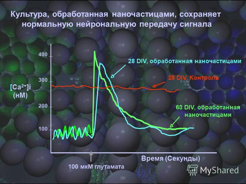 400 200 300 100 Время (Секунды) 100 мкM глутамата 68 DIV, обработанная наночастицами - 28 DIV, Контроль 28 DIV, обработанная наночастицами [Ca 2+ ]i (нM) Культура, обработанная наночастицами, сохраняет нормальную нейрональную передачу сигнала