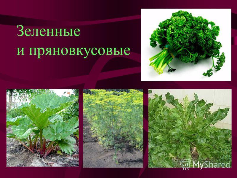 Зеленные и пряновкусовые