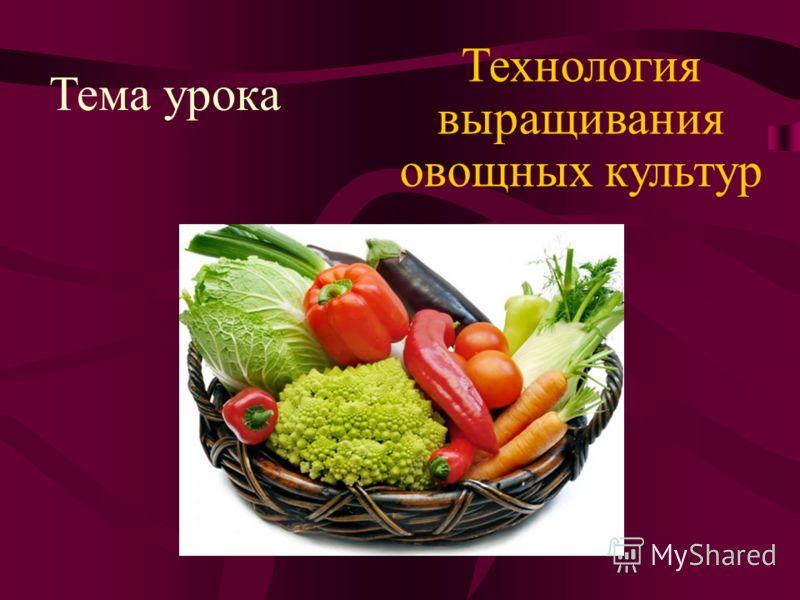 Тема урока Технология выращивания овощных культур